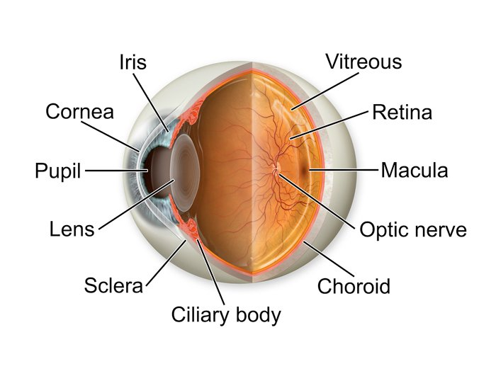 Know Your Eye